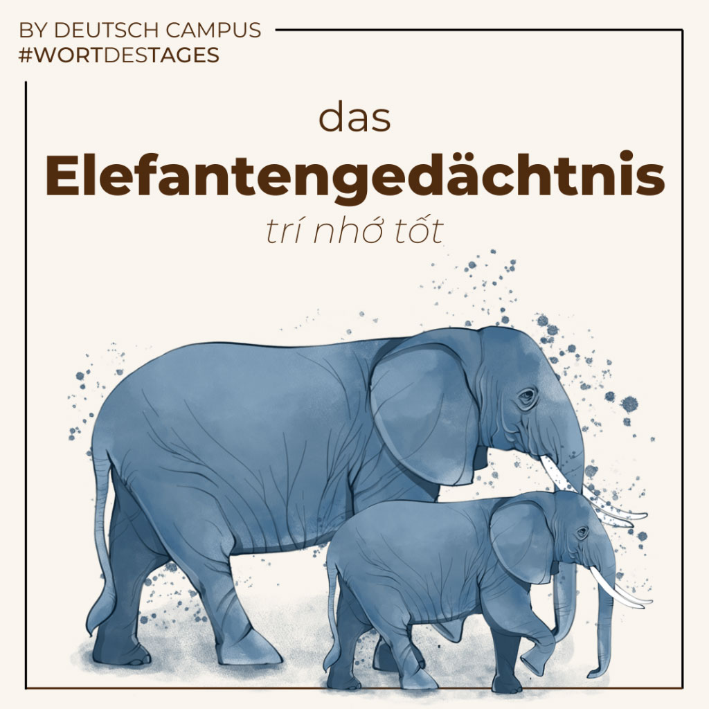 elefantengedaechtnis